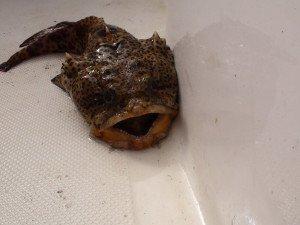 Florida DogFish